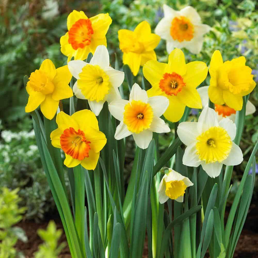 Ảnh hoa màu trắng, vàng đẹp nhất