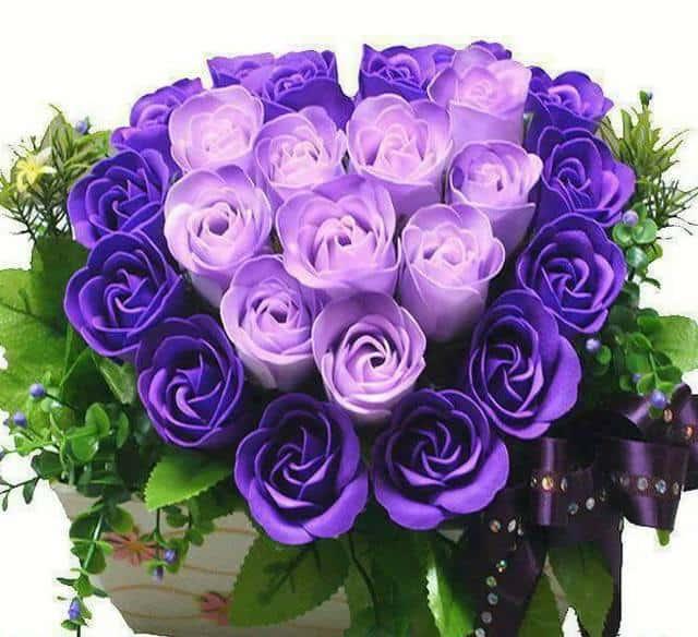 quà tặng hoa hồng violet ngày valentine
