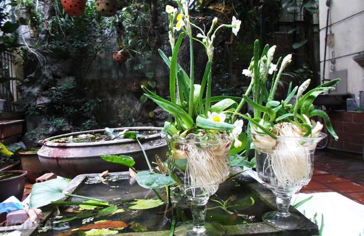 Hỗn hợp nước giúp hoa tươi lâu