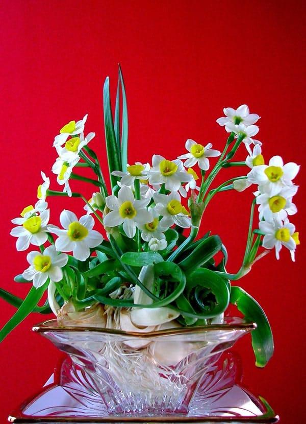 Chậu cây hoa thủy sinh