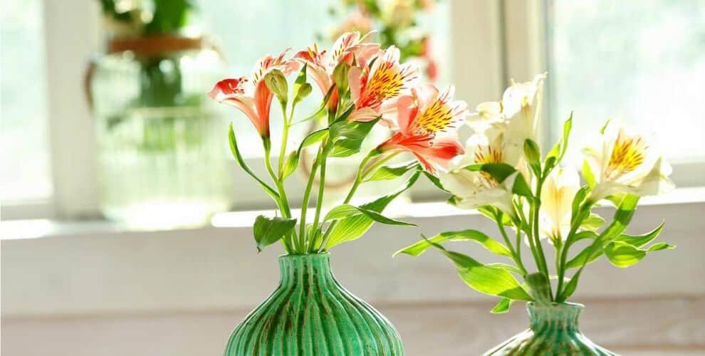Đặc điểm nổi bật của hoa thủy tiên