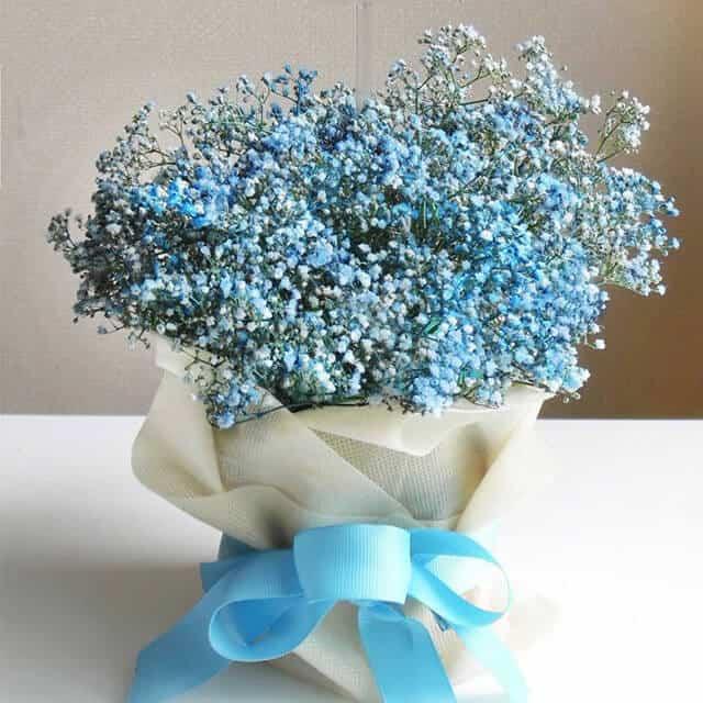 Bó hoa baby khô màu xanh