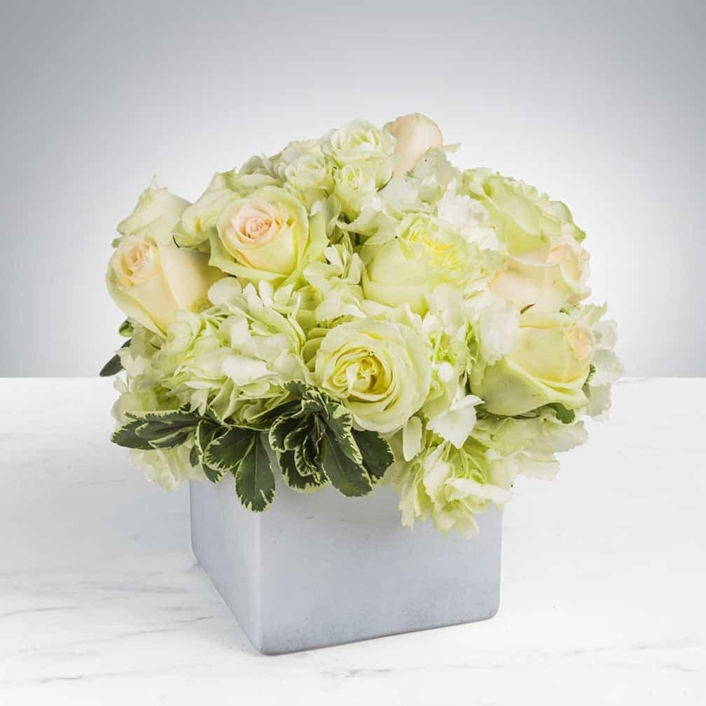 Ý nghĩa hoa hồng trắng phớt