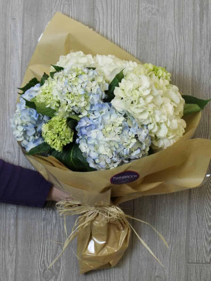 Cẩm tú cầu - Hoa tươi tặng người yêu ngày valentine