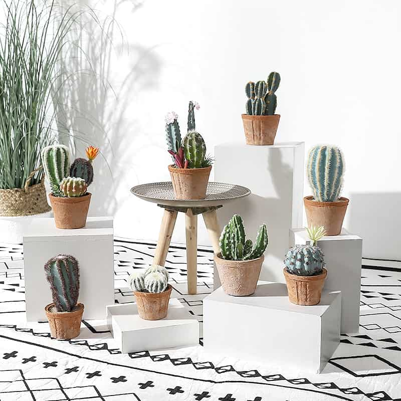 Cactus - Cây xương rồng có sức sống mạnh mẽ