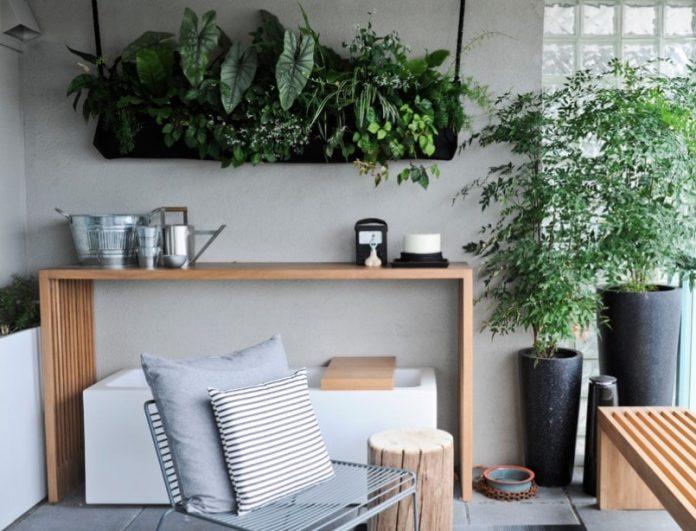 Cây trồng trong nhà lọc không khí tốt nhất