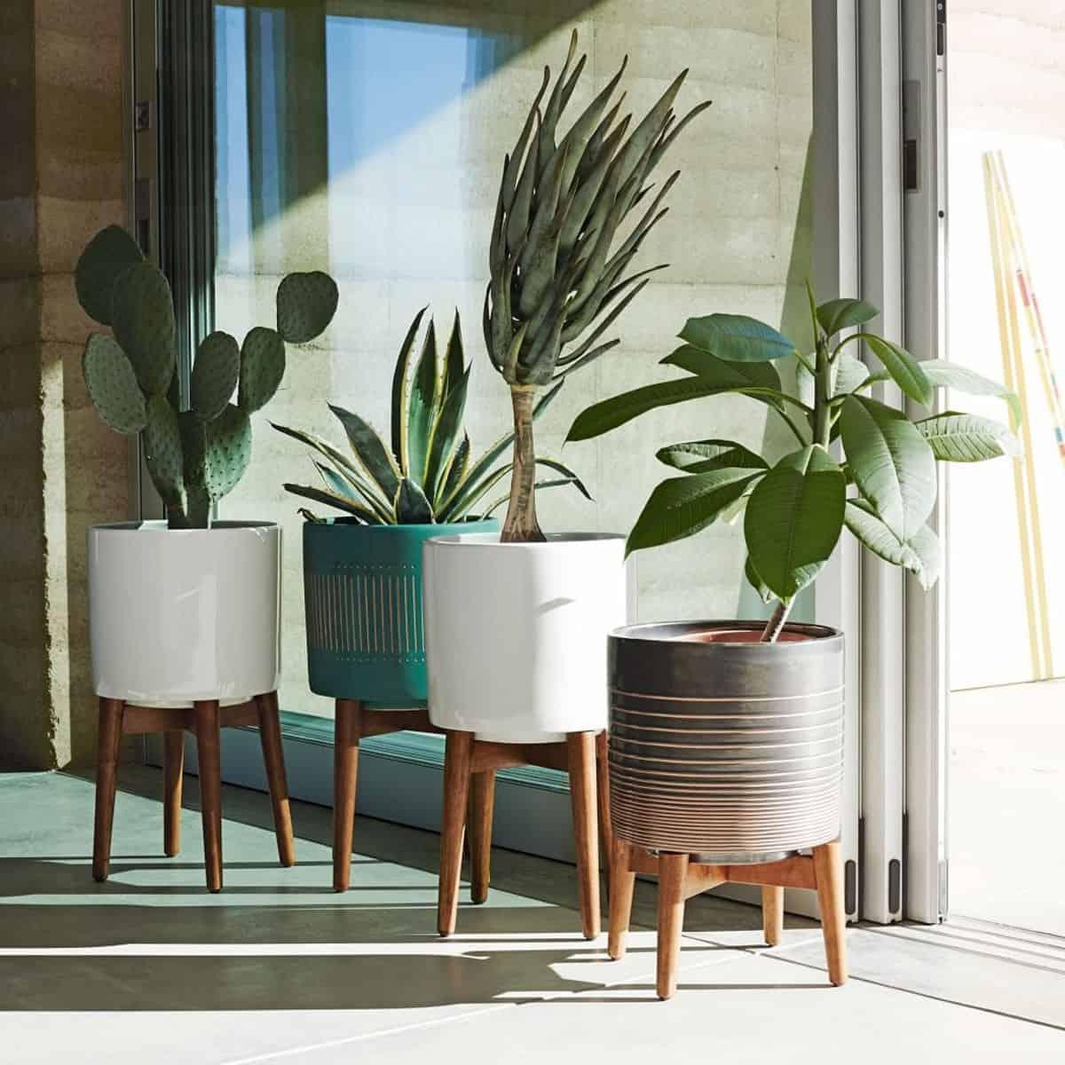 Trồng cây cảnh vừa tốt cho sức khỏe vừa trang trí nhà