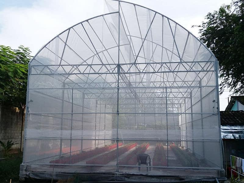 Màng nhà lưới trồng hoa tulip