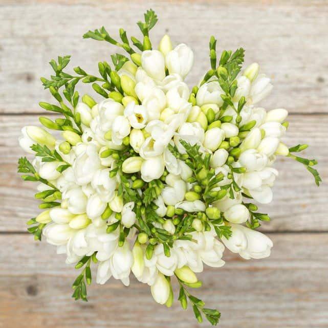 Những bông hoa màu trắng xinh đẹp