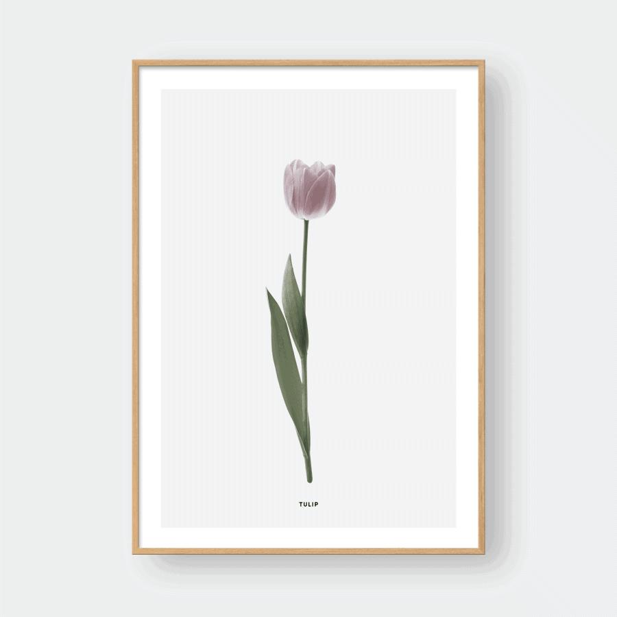 Sơ lược về hoa tulip