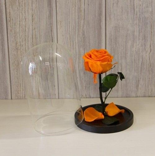 Hoa hồng cảm biểu tượng của sự đam mê cháy bỏng
