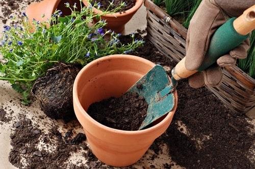 Không nên để đất bị khô cứng