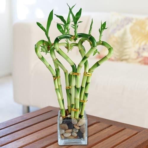Hiểu rỏ về loại cây mà bạn đang trồng