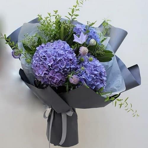Hoa cẩm tú cầu tím như tình yêu của mẹ