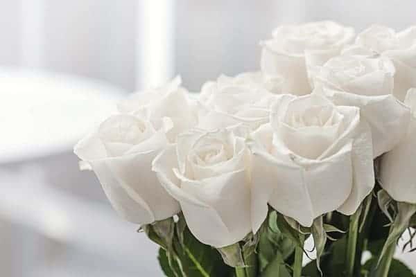 Hoa hồng trắng trong tang lễ