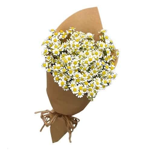 Bó hoa cúc thân thương