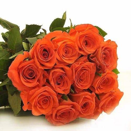 Ý nghĩa hoa hồng cam đặc biệt