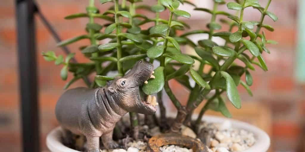Trang trí thêm các mô hình trên chậu cây