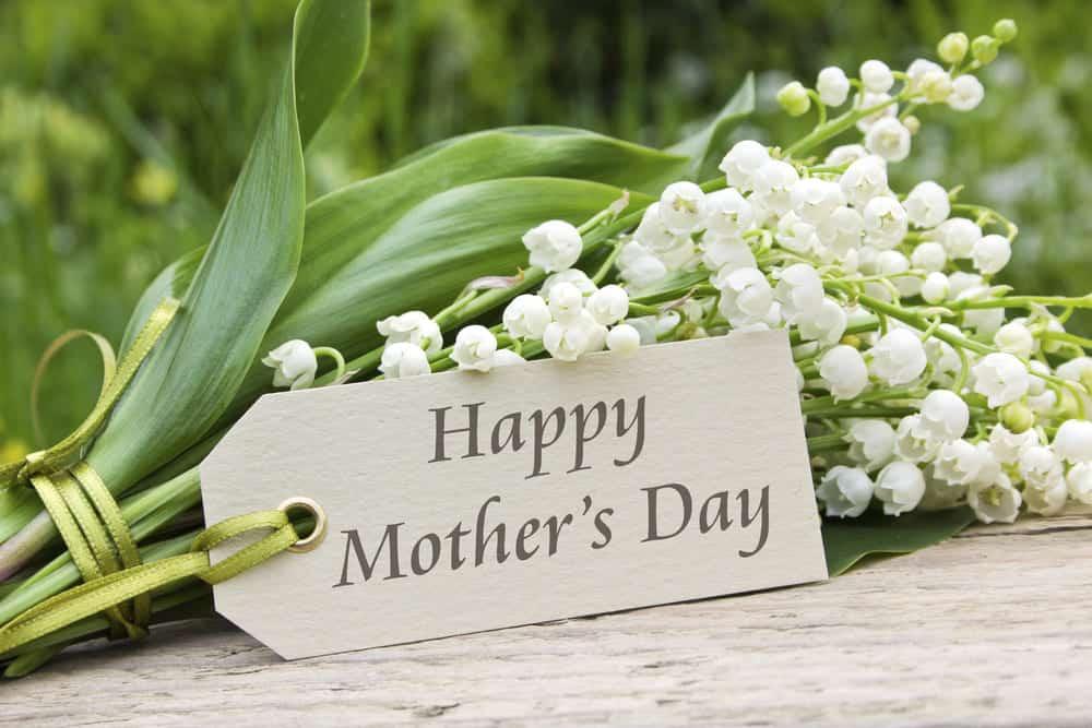 Hoa linh lan trắng chúc mừng ngày của mẹ