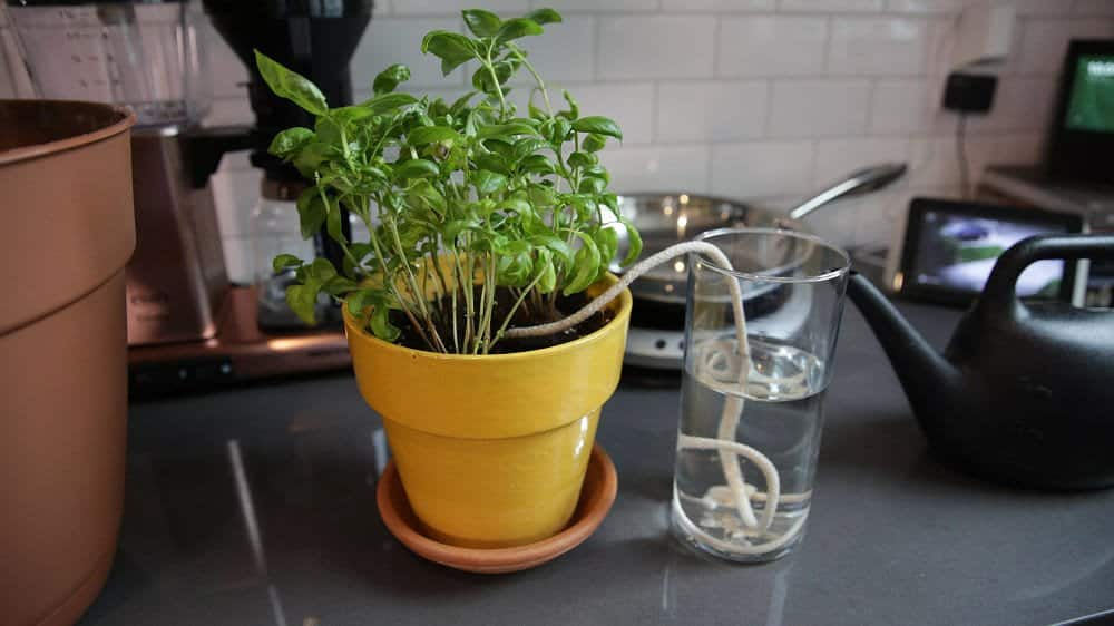 Sử dụng dây bông và một bình nước