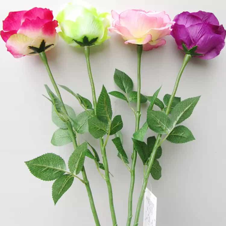 Hoa hồng nhiều màu sắc